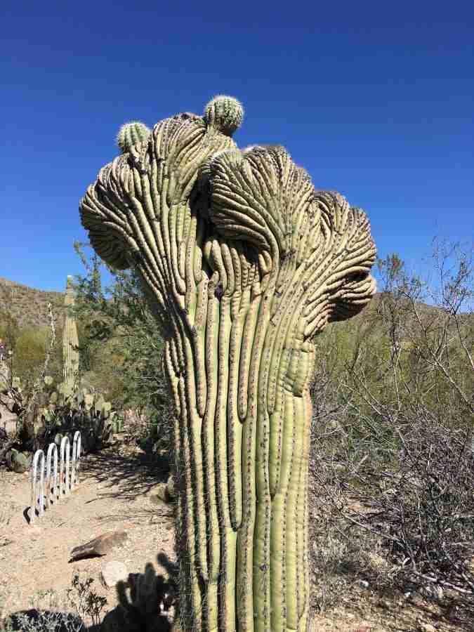 Day 3-BAC Tucson Spring Tour-Desert Mtn Museum