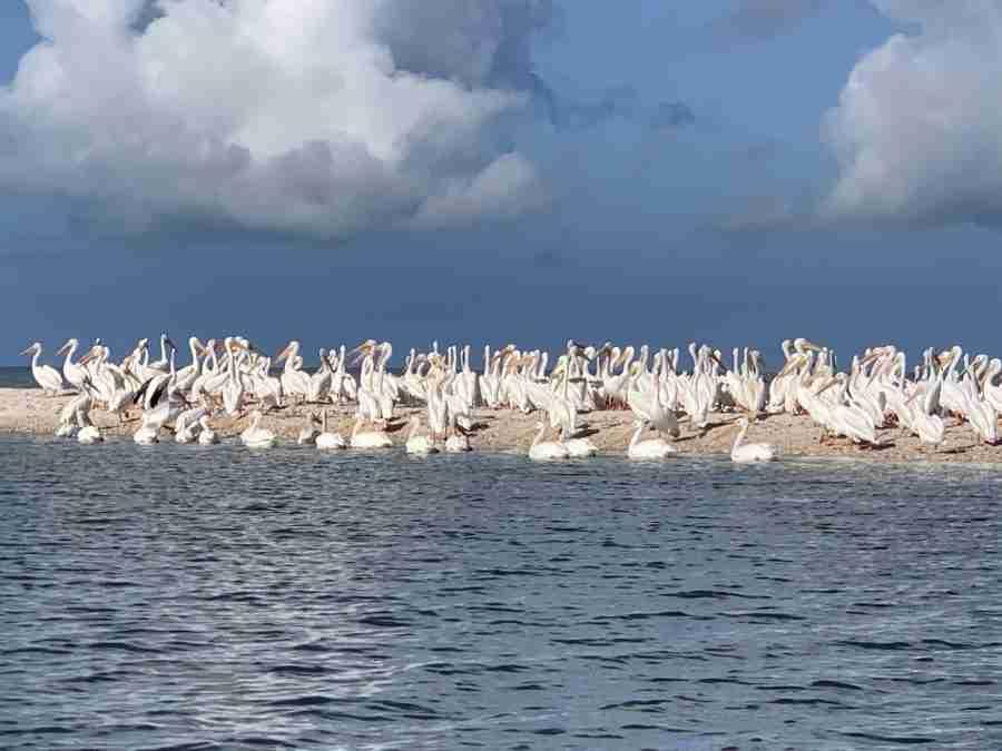 WUSF Everglades Canoe trip