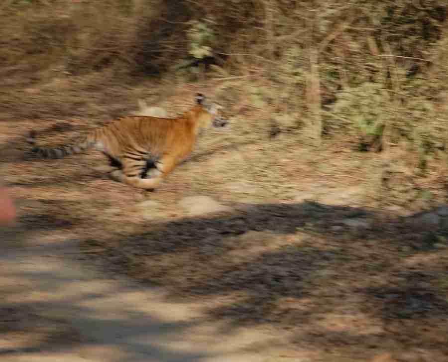 Day 3-Ramnagar to Corbett Nat'l Park