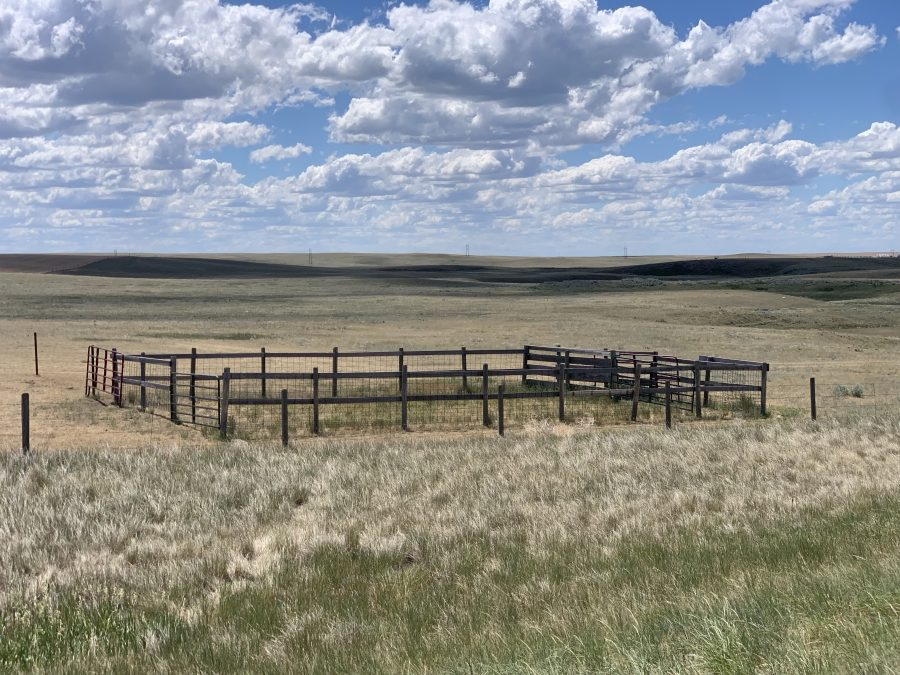 Day 18-Cut Bank to Chester, MT-65 miles with 900 feet of elevation.